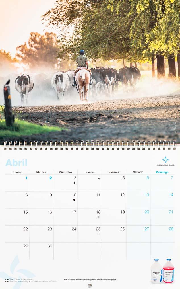 Página del mes de abril del Calendario empresarial Biogénesis-Bagó con una imagen de un arreo de vacas holando-argentino del Banco de imágenes de Marco Guoli, Argentina