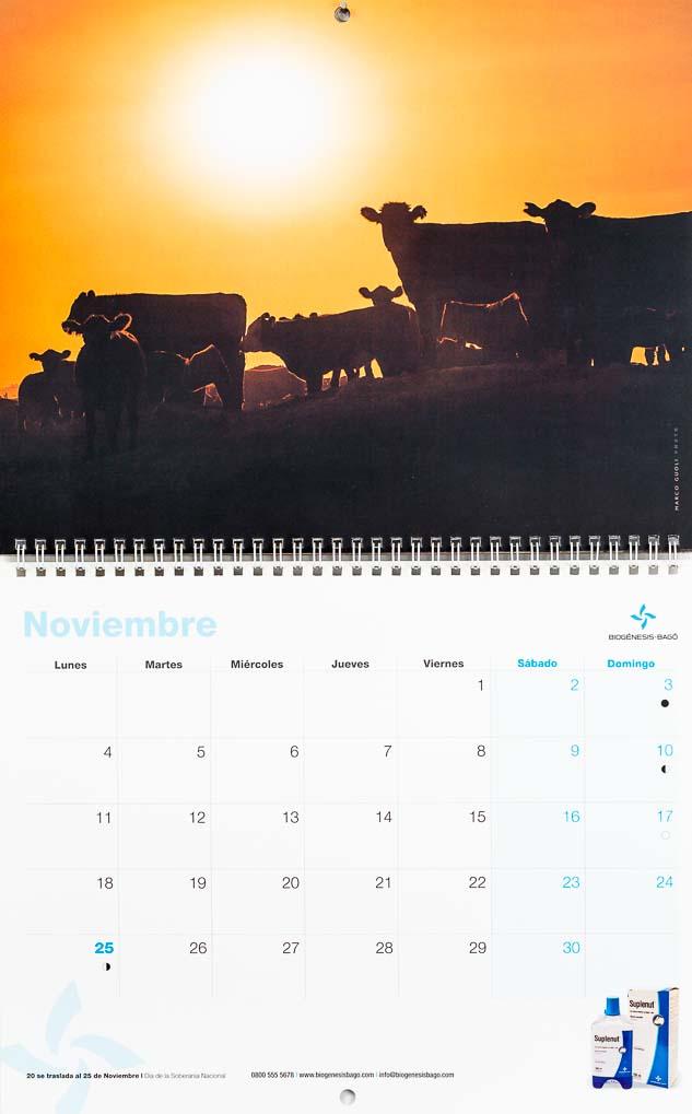Pbgina del mes de noviembre del Calendario empresarial Biogénesis-Bagó con una imagen de unas vacas durante la puesta de sol del Banco de imágenes de Marco Guoli, Argentina