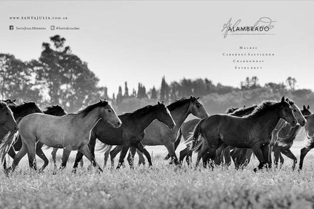 Boceto de la brochure Alambrado de Bodega Familia Zuccardi con una imagen de caballos de Marco Guoli