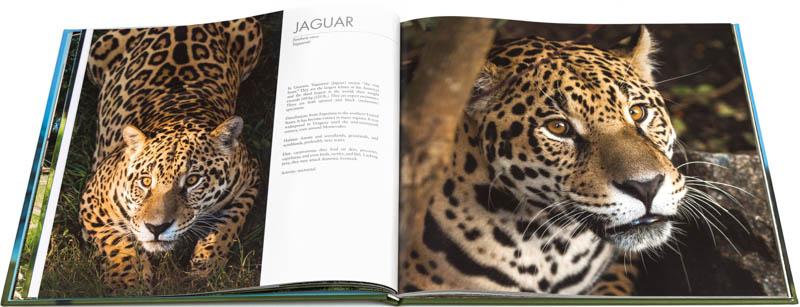 Doble página interna dedicada al yaguareté del Libro fotográfico Bioparque M'Bopicuá