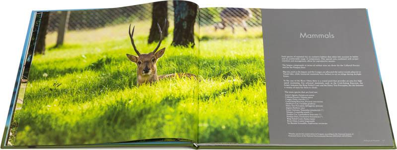 Doble página interna del Libro fotográfico Bioparque M'Bopicuá con una imagen de un venado