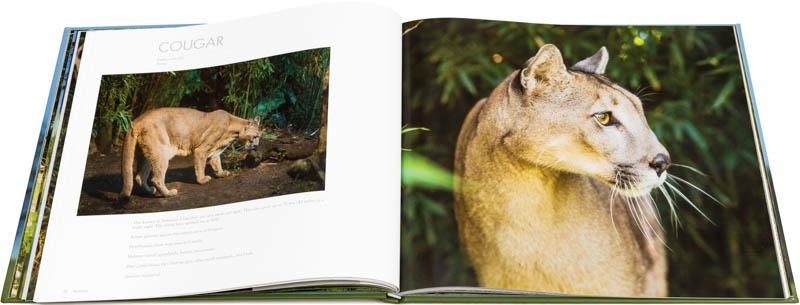 Doble página interna dedicada al puma del Libro fotográfico Bioparque M'Bopicuá