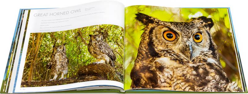 Doble página interna dedicada al ñacurutú del Libro fotográfico Bioparque M'Bopicuá
