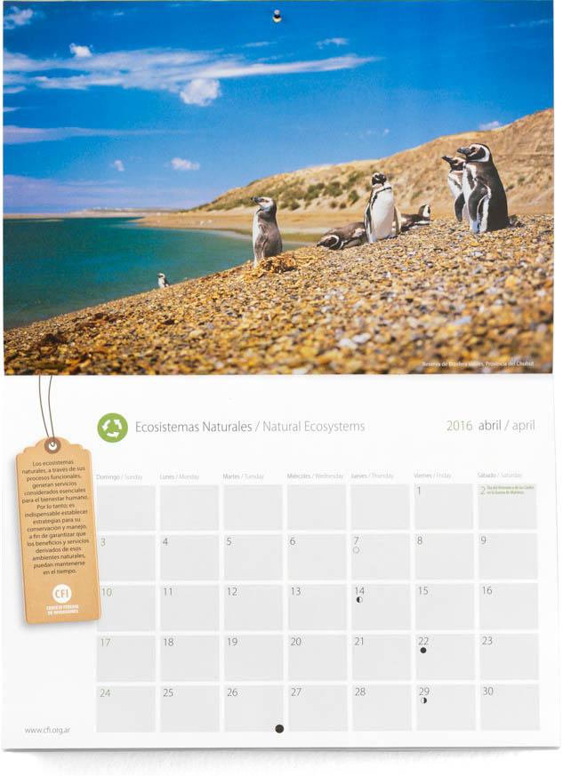Pagina con el mes de abril del Calendario Consejo Federal Inversiones, con una fotografía de pingüinos en Península Valdés, Chubut, DEL BANCO DE IMAGENES DE MARCO GUOLI, Argentina