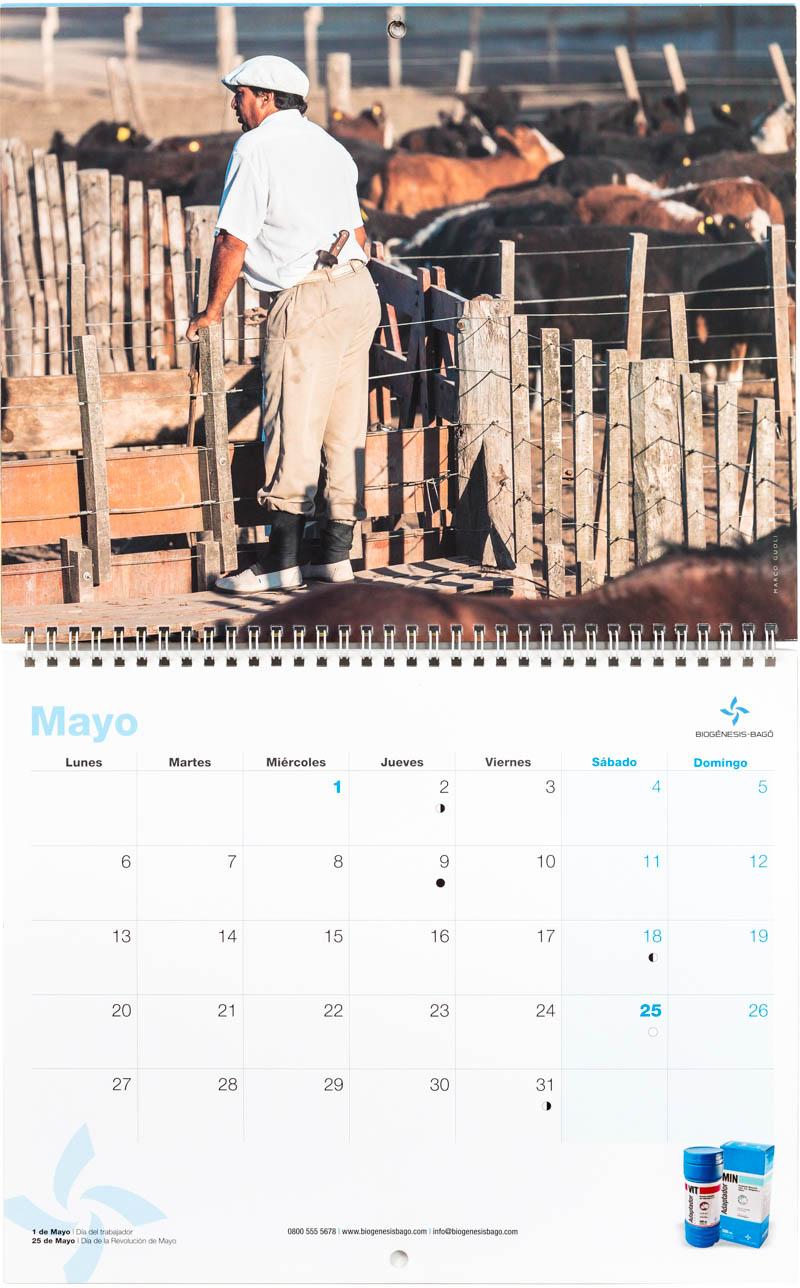 Mes de mayo del Calendario empresarial Biogénesis-Bagó con una imagen de un peón trabajando en un feed-lot del Banco de imágenes de Marco Guoli, Argentina