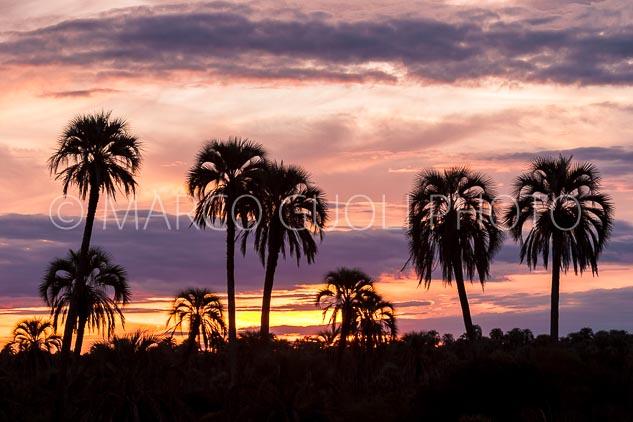 Ocaso en el parque nacional el palmar, entre ríos, Argentina
