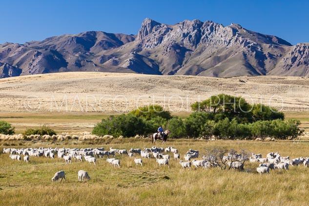 El mes de febrero Calendario Argentina 2020 con un Paisano a caballlo arreando ovejas en estancia Leleque, Chubut, Argentina