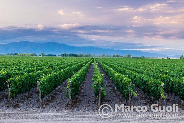 Onceava página con el mes de noviembre del Calendario Argentina 2013 y una fotografía de un viñedo en Mendoza