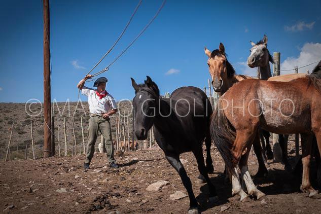 Paisano trabajando en un un corral con caballos, Mendoza