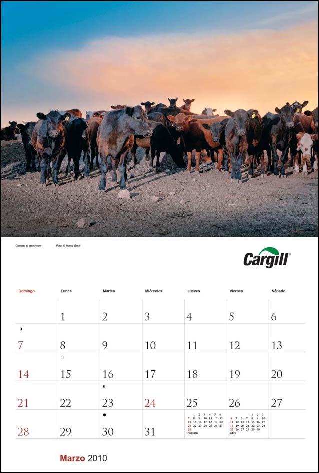 Imagen de la página del mes de marzo del Calendario empresarial Cargill Argentina con una fotografía de unas vacas Aberdeen Angus del Banco de imágenes de Marco Guoli, Buenos Aires