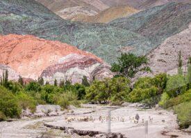 Foto en alta resolución del Banco de imágenes Argentina con un pastor y su rebaño en el cerro de los 7 colores, Jujuy, Argentina