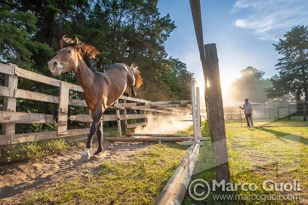 Fotografía de un caballo entrenando salto de Marco Guoli, una de las 7 imágenes elegidas para la muestra para el día del caballo organizada anualmente por el  Ministerio de agricultura, ganadería y pesca de la Argentina