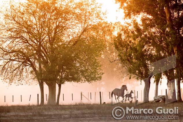 Fotografía de una yegua corriendo con su potro de Marco Guoli, elegida para la muestra para el día del caballo organizada anualmente por el  Ministerio de agricultura, ganadería y pesca de la Argentina