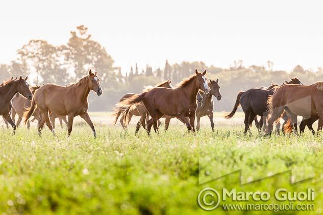 Fotografía de unos caballos en un campo de Marco Guoli, una de las 7 imágenes elegidas para la muestra para el día del caballo organizada anualmente por el  Ministerio de agricultura, ganadería y pesca de la Argentina