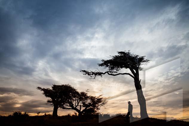 La pagina del mes de agosto del Calendario Argentina 2021, con una foto de unas lengas al amanecer, Tierra del fuego, Argentina
