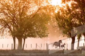 Fotografía de un paisaje en la provincia de Buenos Aires, Argentina