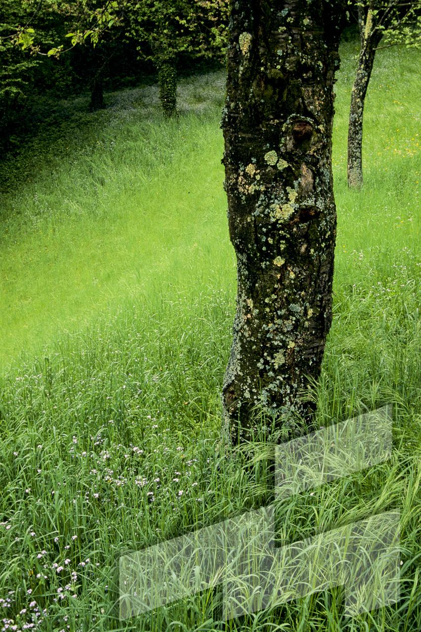 Foto de Prunus sp., Italia