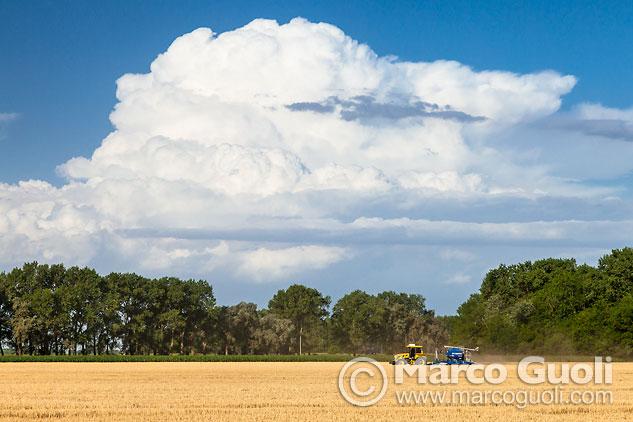 Mes de diciembre del Calendario Argentina 2015 con una imagen de la cosecha de trigo en la provincia de Buenos Aires