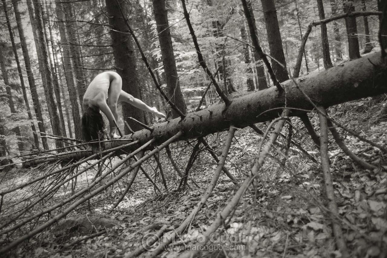Anima nel bosco