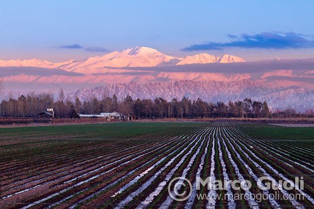 fotografía que reúne los elementos típicos presentes en el paisaje de Mendoza: cumbres nevadas, una finca con su arboleda, un cultivo
