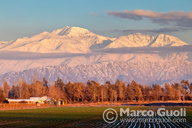 fotografía que reúne los elementos típicos que se encuentran en el paisaje de Mendoza: cumbres nevadas, una finca con su arboleda, un cultivo